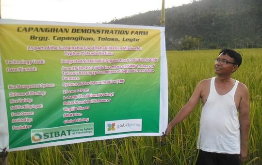 planting rice through organic farming technologies