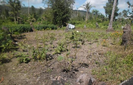 Demo farm damaged by typhoon Senyang and Ruby