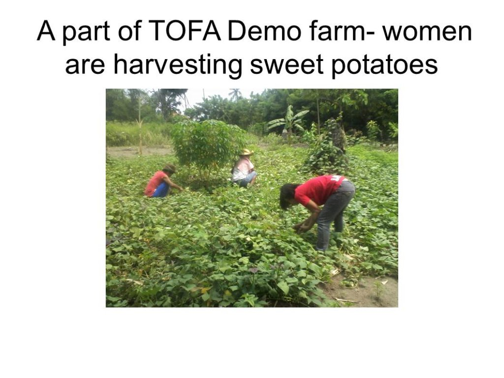 women harvesting crops at the demofarm