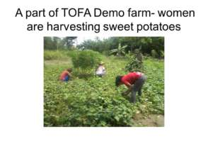 women harvesting crops at the demofarm