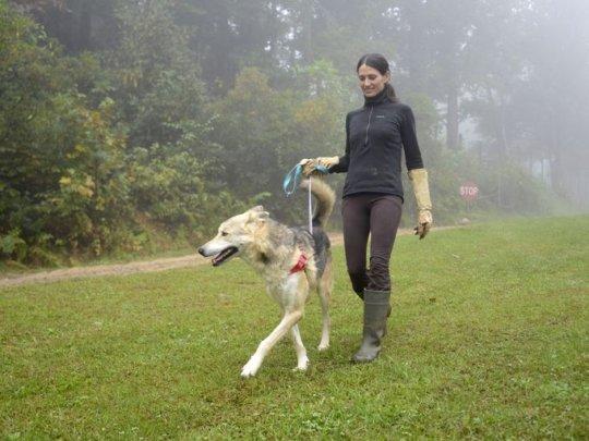 Lobo and Kamala