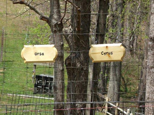 Cyrus and Ursa