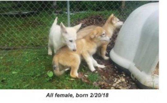 Puppies Girls Day 1