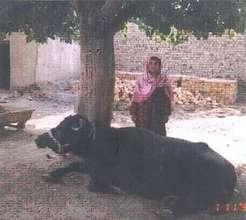 Loan to buy livestock