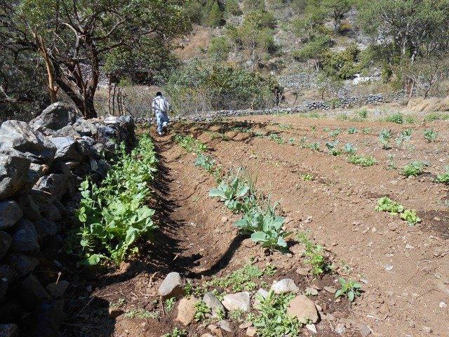 The startings of a vegetable garden in Potrerillos