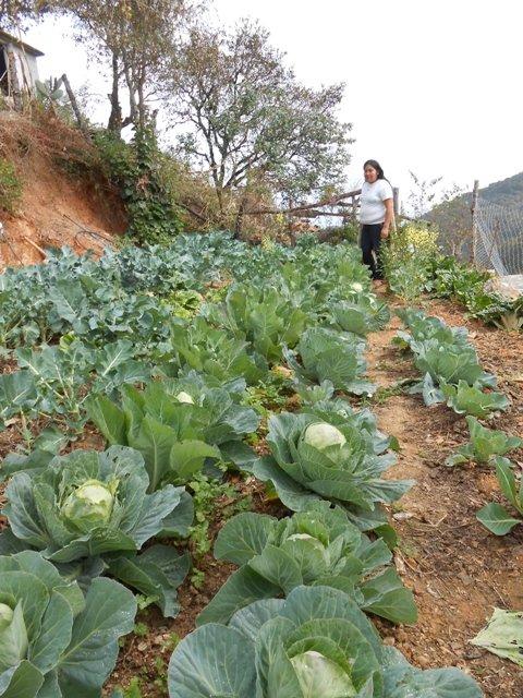 Delicious organic produce