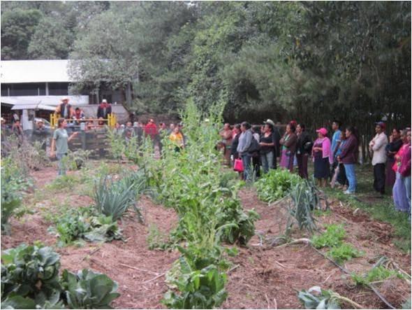 Visiting the vegetable garden in Tonatico ranch