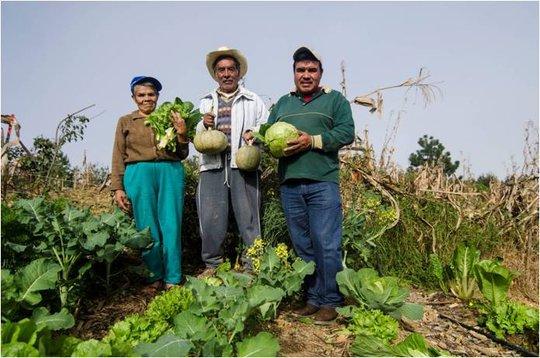 Family vegetable garden