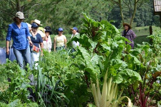 Organic agriculture workshop