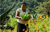 Vegetable gardens in the Sierra Gorda