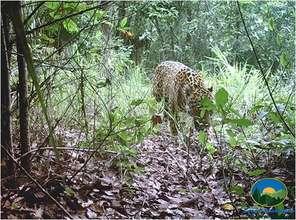 Jaguar spotted in Sierra Gorda