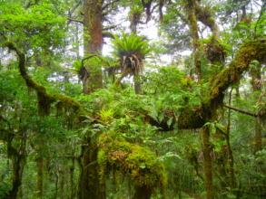 The biodiverse forests of Cerro Prieto