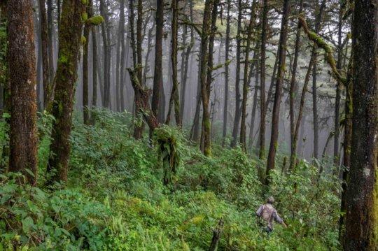 Lush Cloud forest due to the abundant rains