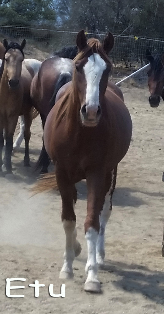 Navajo colt youngster