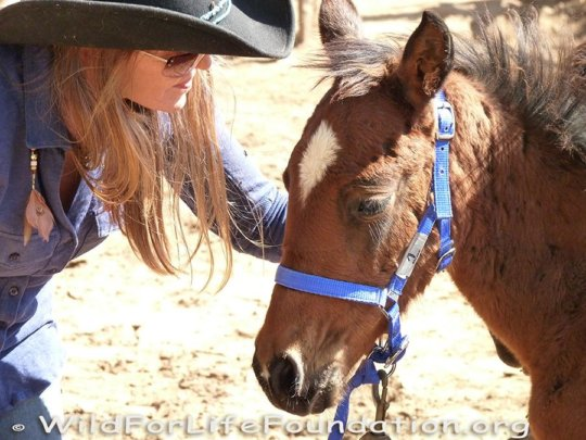 Navajo Horses Rescue and Recovery Mission