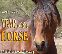 WFLF's Year of the Horse