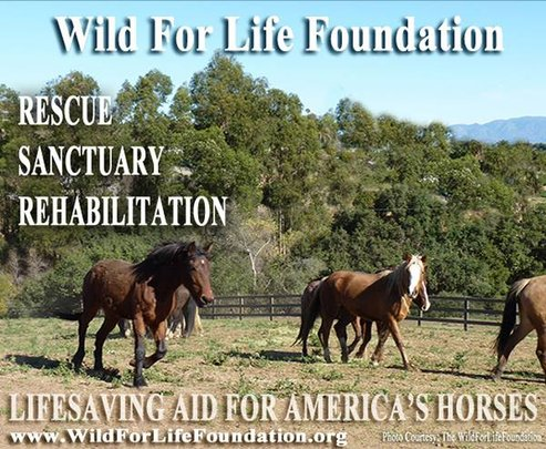 Lifesaving Aid for America's imperiled Horses