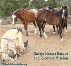 Blessings and Honor for Navajo Mustangs