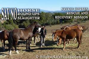 Say NO to roundups and slaughter