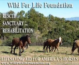 Lifesaving Aid for America's imperiled Horses