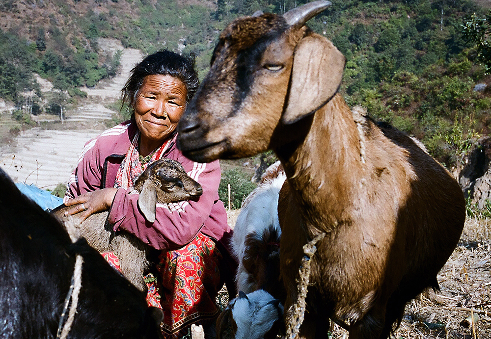 Lal Maya and her goats.