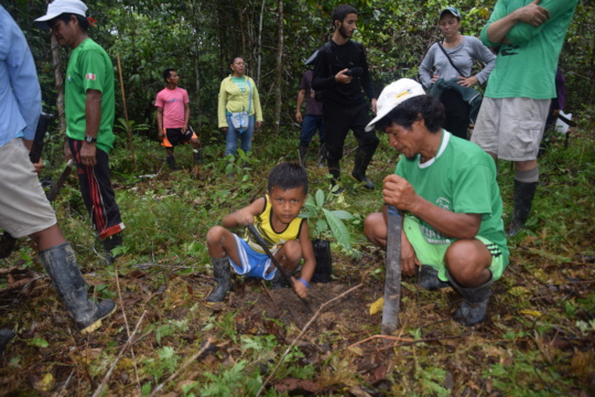 Planting rosewood trees