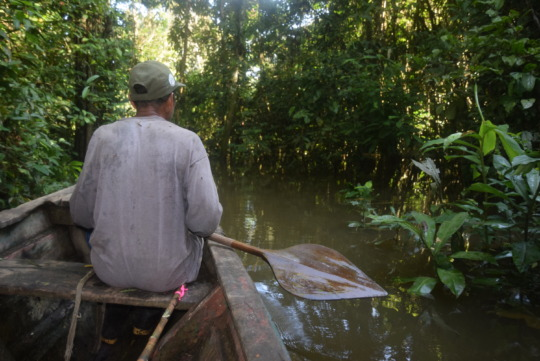 Moving through the backwaters of the Yabasyacu