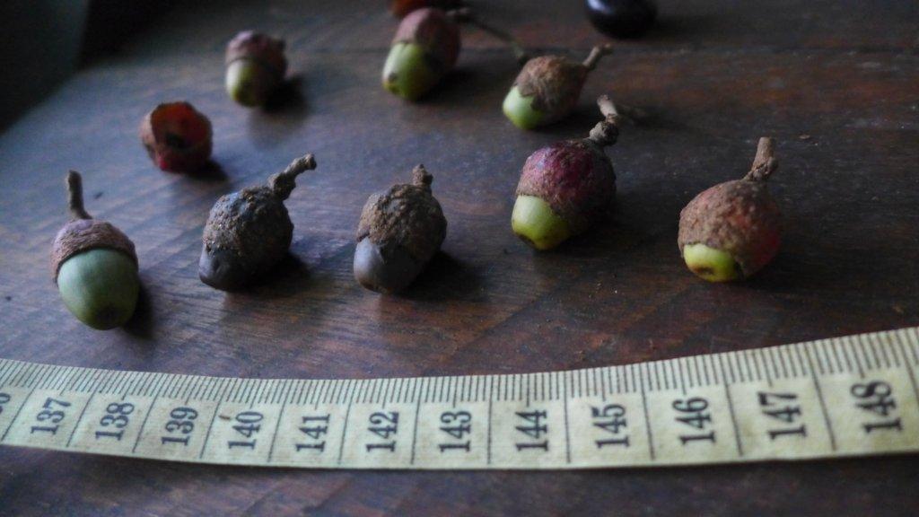 Fruits of canelon