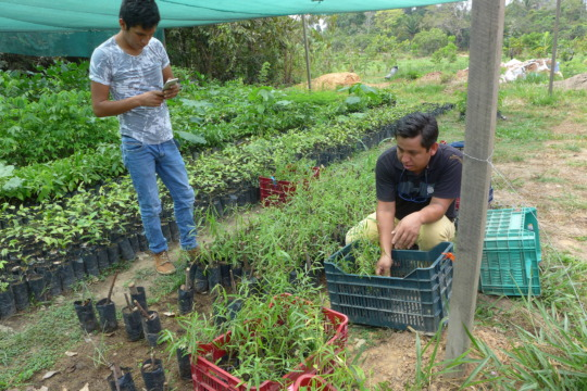 loading up seedlings from the La Joya nursery
