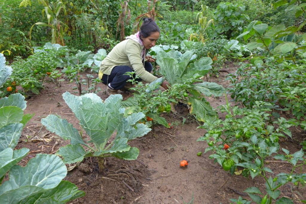 CV researcher Olivia Revilla in the veggie garden