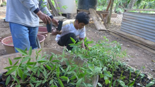 Juan Rafaele working at our first nursery