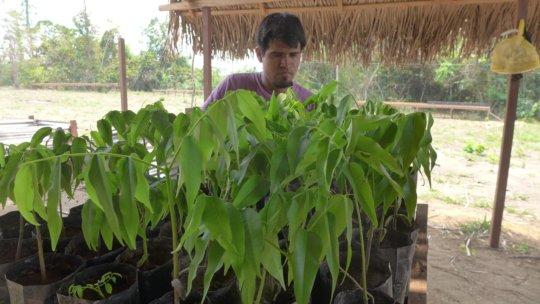 Manuel Huinga with Dipteryx micrantha seedlings