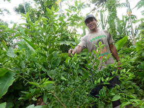 One of our partner farmers showing off a tree
