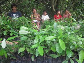 Tree seedlings ready to be planted in Brillo Nuevo