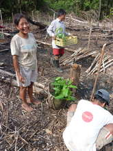 Planting rosewood trees in Brillo Nuevo