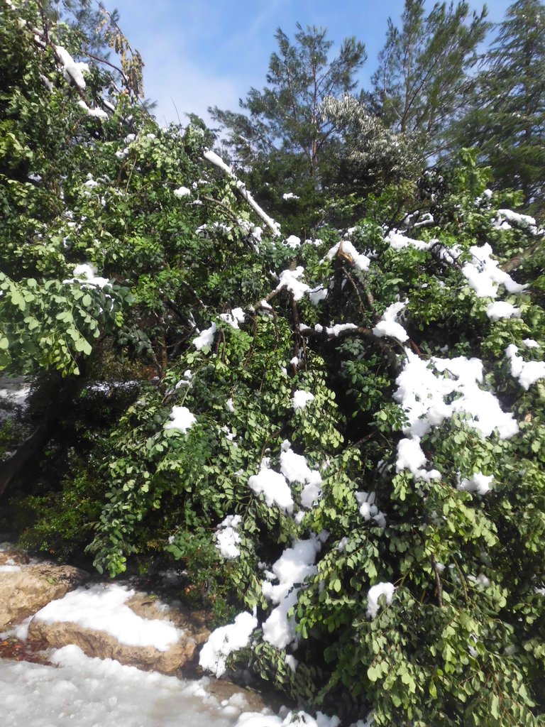 Help Replace Trees Lost in December 2013 Blizzard