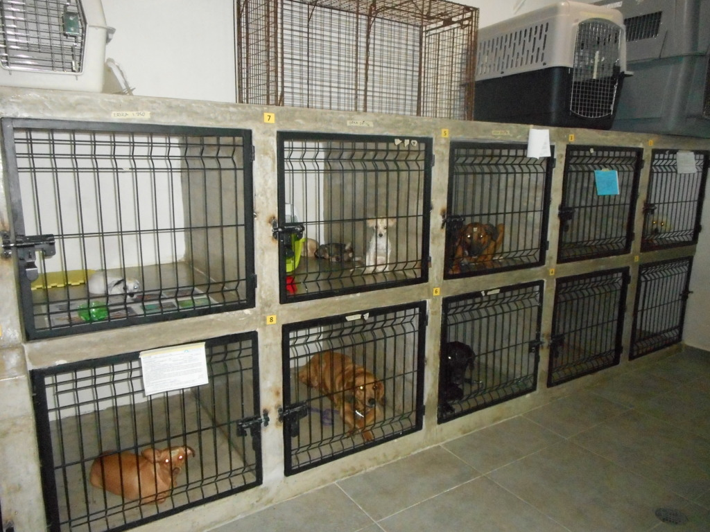 Dogs recovering post surgery in the new clinic