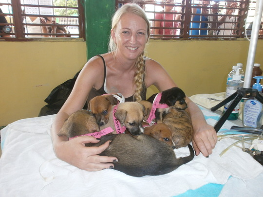 Support Animal Welfare in Mexico