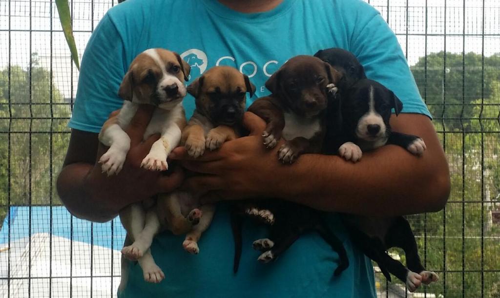 Cute little puppies!