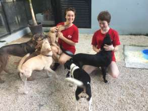 Happy Puppies at Coco's Animal Welfare!