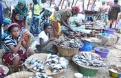 Training of Local Fish sellers on Rebranding