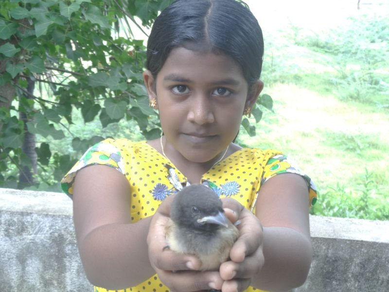 child enjoyed with bird