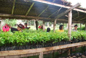 Seedlings from our base bound for Leyte