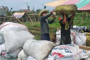 Organic fertilizer production