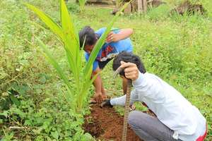 Coconut re-planting