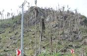 Typhoon Haiyan Coconut Replanting Project