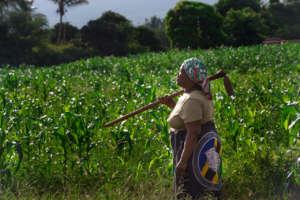 A corn farmer in the LEAD program in Tanzania.