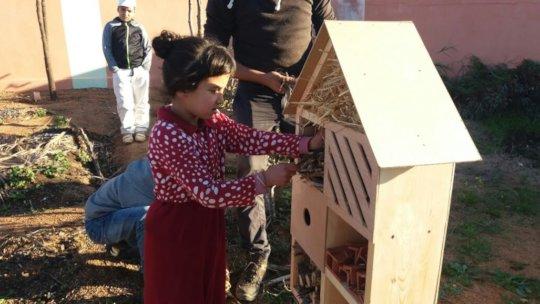 Building Bird houses