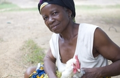 Support a hatchery and feed mill in Liberia
