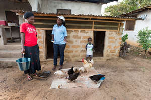 Small scale poultry operation in Liberia